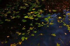 秋天池塘 秋叶的样式在水的 免版税库存图片