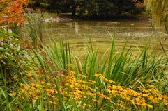 秋天池塘 库存图片