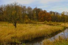 秋天河树黄色森林 库存照片