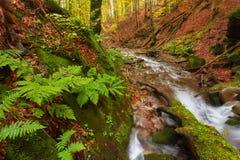 秋天河 在山河上的五颜六色的森林 水在叶子树下 在小河的绿色生苔冰砾 免版税库存照片