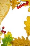 秋天浆果颜色框架叶子 免版税库存图片