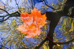秋天浮动的叶子水 免版税库存照片