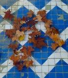 秋天浮动的叶子 免版税图库摄影