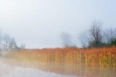 秋天海岸线Jackson Hole湖 免版税库存照片