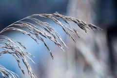秋天淡色和宏观射击的变干的植物山罗卜森林 日落草甸背景 库存照片
