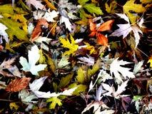 秋天混合物 库存照片