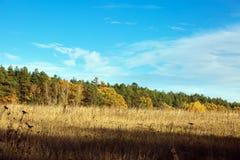 秋天混杂的森林的边缘去领域 反对 免版税图库摄影