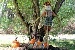 秋天清楚的黎明滑稽的庭院厨房横向保护南瓜成熟农村稻草人天空 免版税库存照片