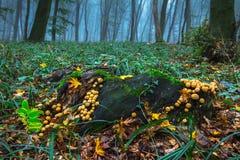 秋天湖反映木头 图库摄影