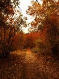 秋天湖反映木头 库存图片