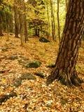 秋天湖反映木头 库存照片