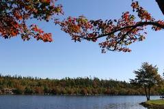 秋天湖离开了 库存照片