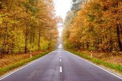 秋天湿路通过森林 免版税库存照片