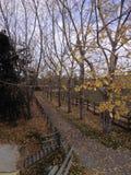 秋天漫步 库存照片
