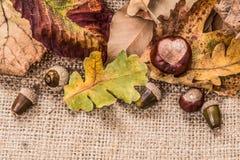 秋天烘干了叶子 免版税库存图片