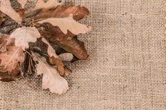 秋天烘干了叶子 图库摄影