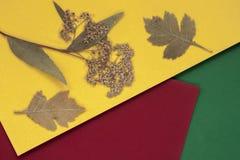 秋天烘干了在五颜六色的明亮的纸,与拷贝空间的背景的叶子您的文本的 在视图之上 秋天概念 免版税库存图片