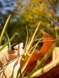 秋天烘干了在草的叶子 免版税库存照片