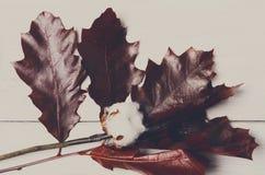 秋天烘干了赤栎叶子在白色木头,背景的 免版税库存图片