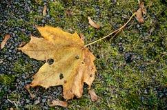 秋天照片。 图库摄影