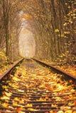 秋天爱秋天隧道在Klevan乌克兰 库存照片