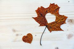 秋天爱-有心脏的秋天叶子 库存照片