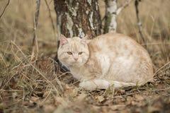 秋天猫 库存照片