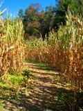 秋天玉米迷宫 库存照片