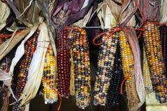 秋天玉米 库存照片