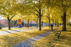 秋天瑞典 免版税图库摄影