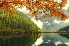 秋天瓷湖结构树 库存图片