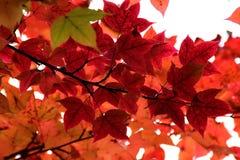 秋天瓷 9个秋天颜色 免版税图库摄影