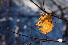 秋天生叶在雪,结霜的早午餐下在冬天 免版税库存照片