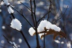 秋天生叶在雪,结霜的早午餐下在冬天 图库摄影