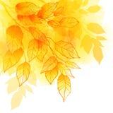 秋天生叶水彩传染媒介背景 库存照片
