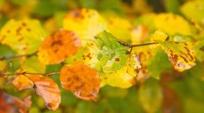 秋天生锈和湿叶子特写镜头 库存图片