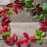 秋天用五颜六色的黄色,红色,橙色葡萄离开在木背景与拷贝空间 秋天概念 免版税库存照片
