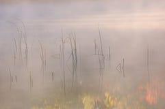 秋天用茅草盖反映 免版税库存照片