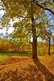秋天由后照的唯一结构树 库存图片