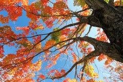 秋天留下树 库存照片