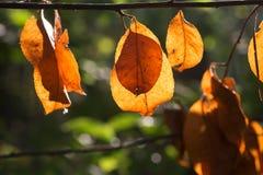 秋天留下桔子 库存照片
