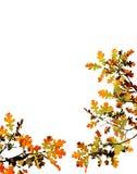 秋天留下白色 免版税库存照片