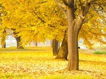 秋天留下结构树 免版税图库摄影