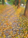 秋天留下背景-储蓄照片 库存照片