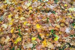 秋天留下背景 图库摄影