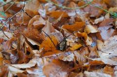 秋天留下背景 库存照片