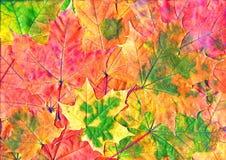 秋天留下自然纹理 免版税库存照片
