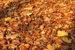 秋天留下轻的日落 库存照片