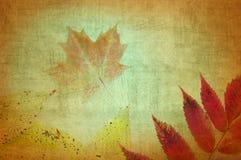 秋天留下织地不很细摘要 库存照片