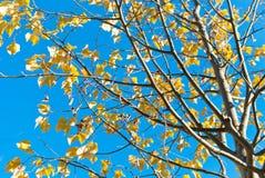 秋天留下结构树 库存图片